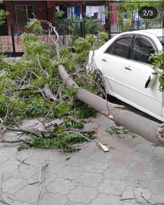 В Актау дерево чуть не раздавило автомобиль, фото-2