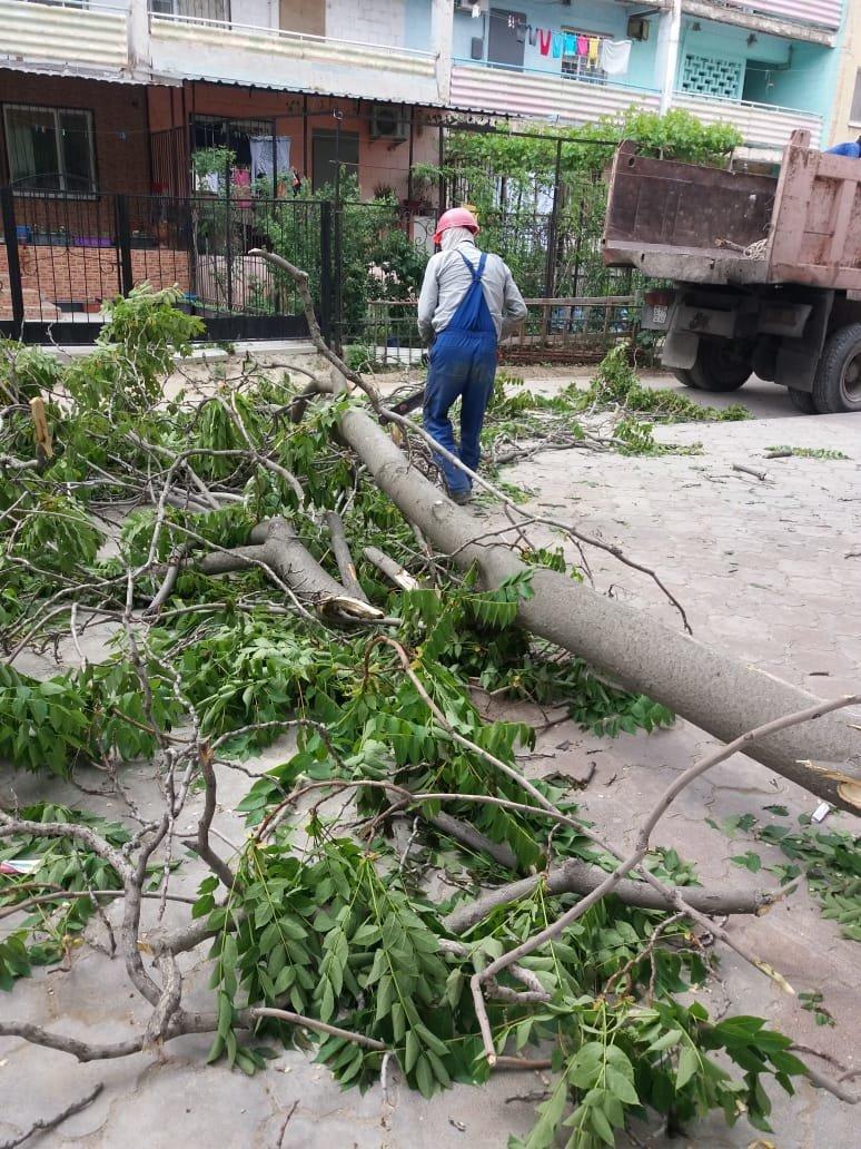 В Актау дерево чуть не раздавило автомобиль, фото-5