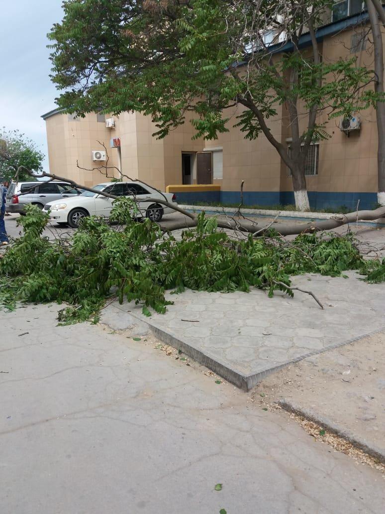 В Актау дерево чуть не раздавило автомобиль, фото-6