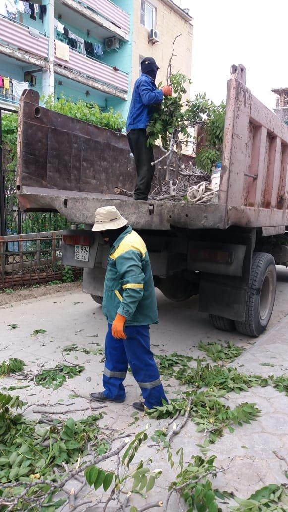 В Актау дерево чуть не раздавило автомобиль, фото-4