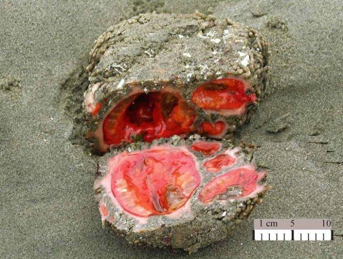 В Мангистау есть камни, способные расти, размножаться и передвигаться, фото-1