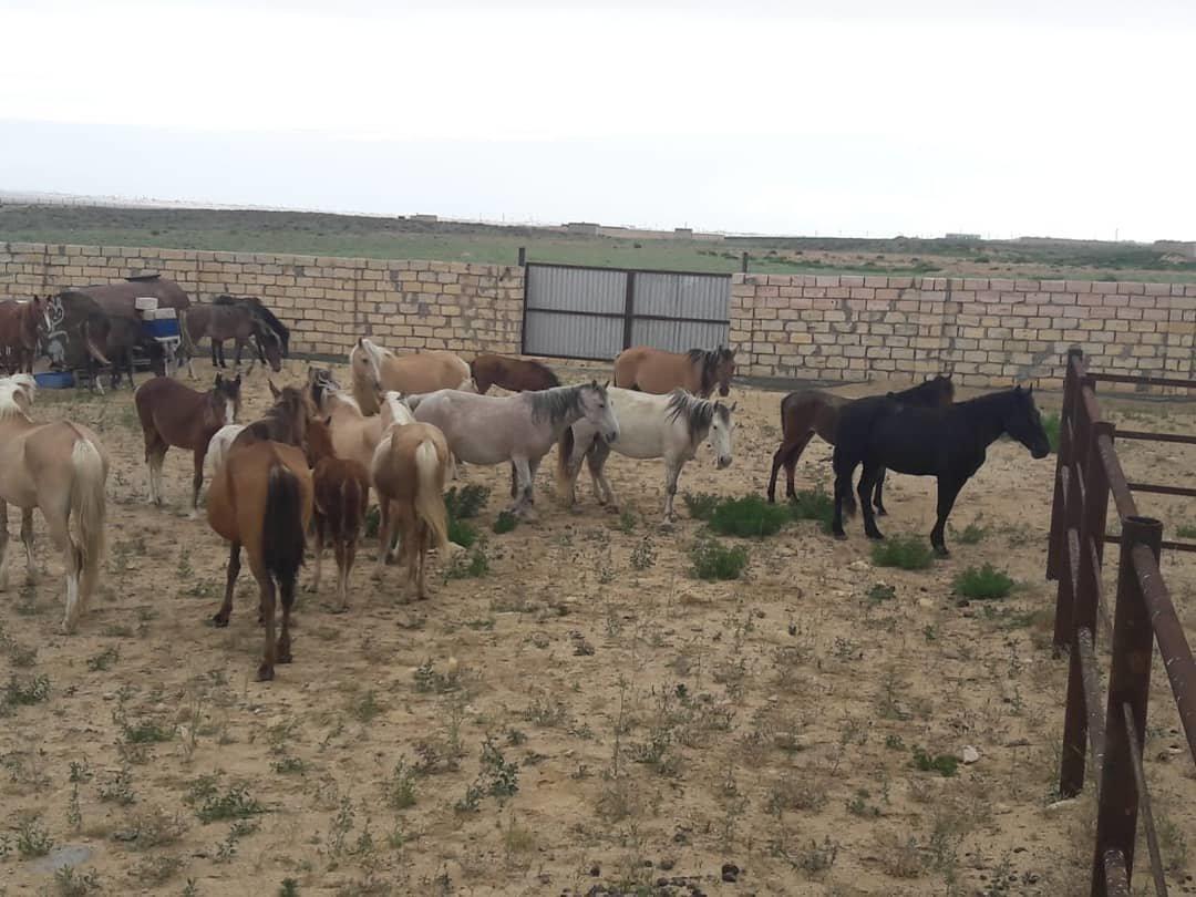 Ели зелень: в Актау оштрафовали хозяина лошадей, фото-1