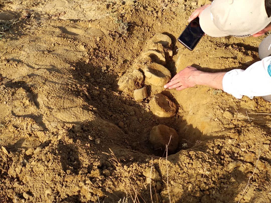 Найденного в Мангистау ихтиозавра передали в краеведческий музей, фото-3