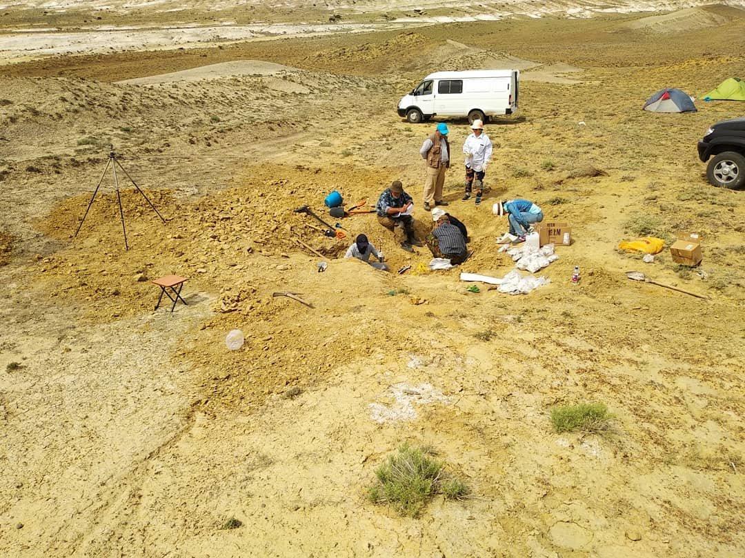 Найденного в Мангистау ихтиозавра передали в краеведческий музей, фото-2