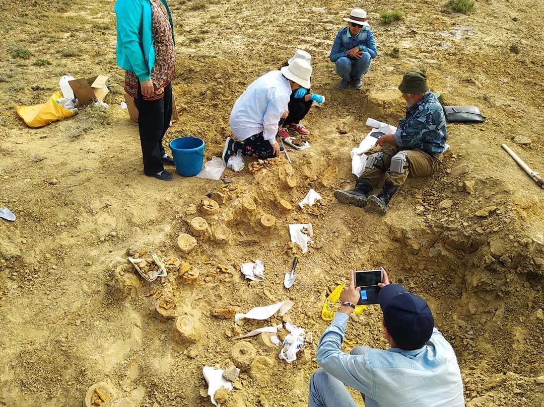 Найденного в Мангистау ихтиозавра передали в краеведческий музей, фото-1