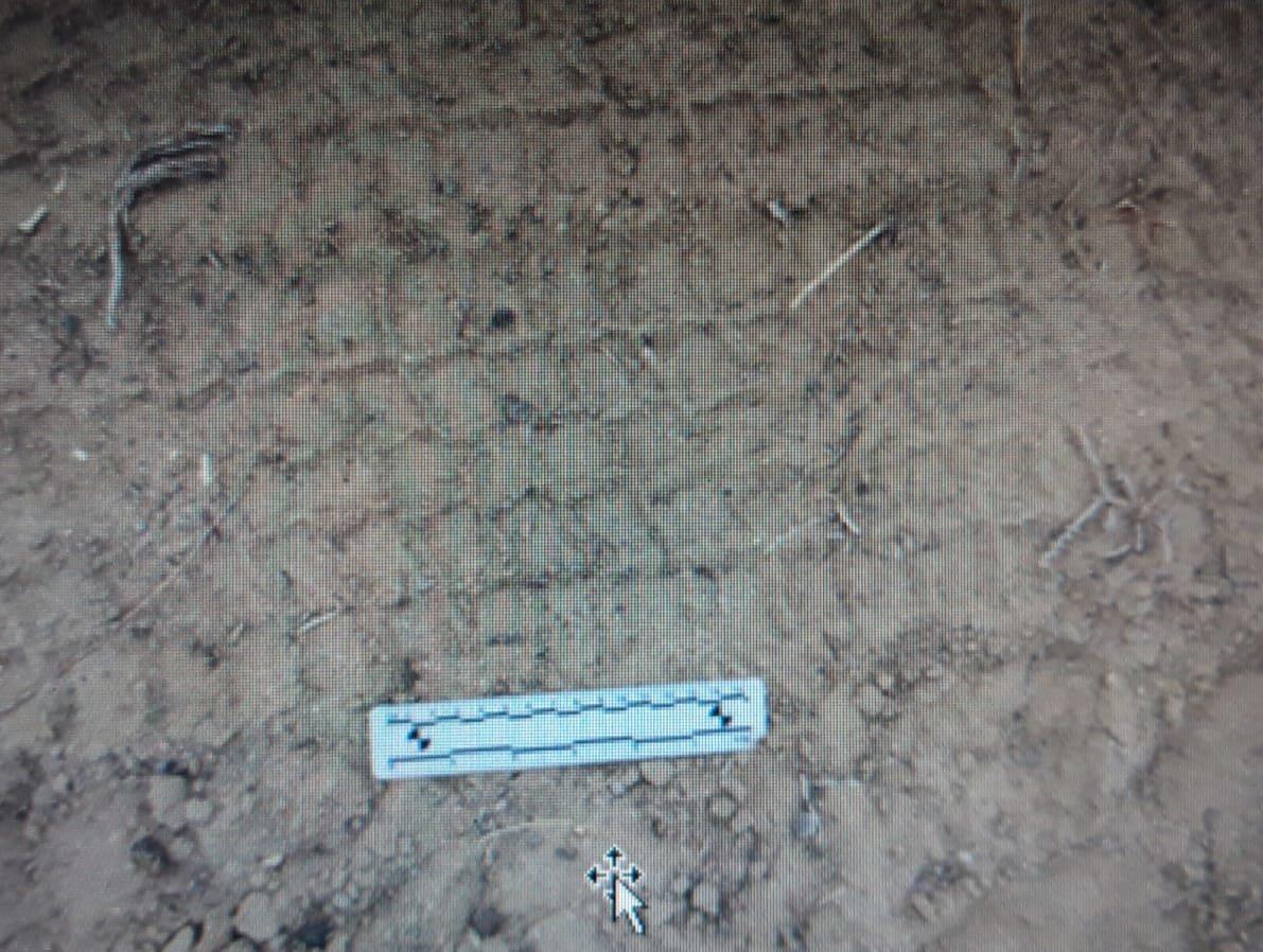 Скотокрадов задержала полиция в Мангистау, фото-2