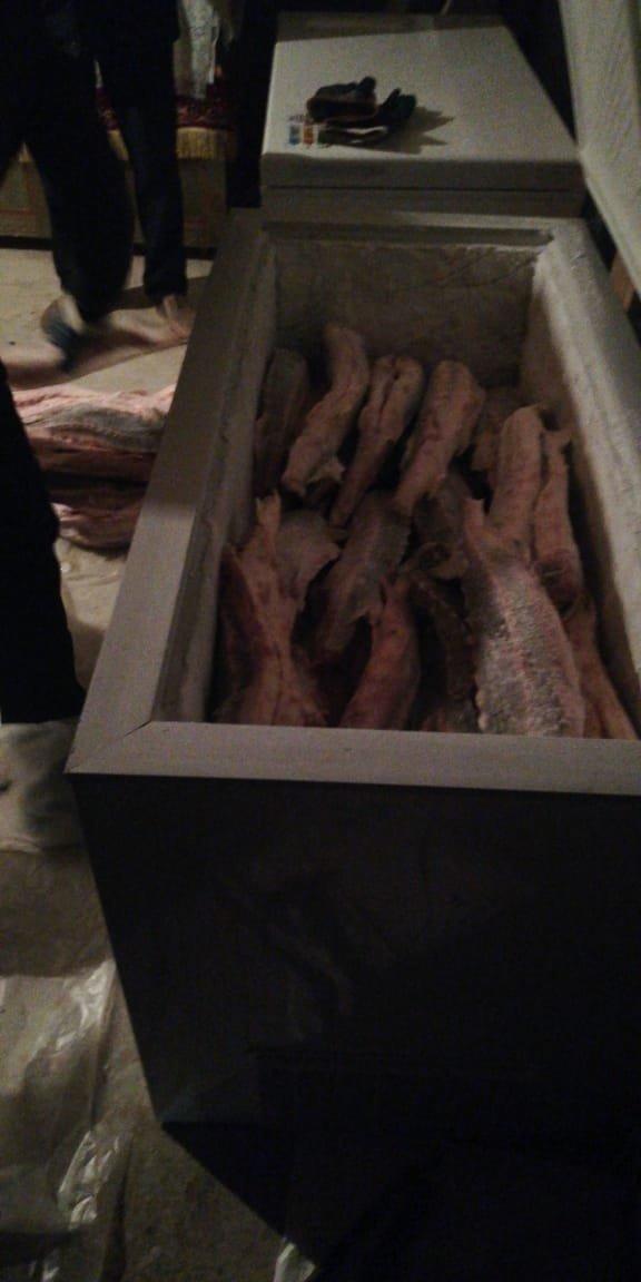 250 килограммов осетра обнаружили в квартире в Жанаозене, фото-3