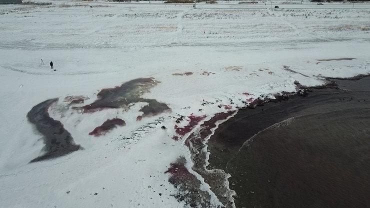 Экологи рассказали, почему Каспий стал красным, фото-1