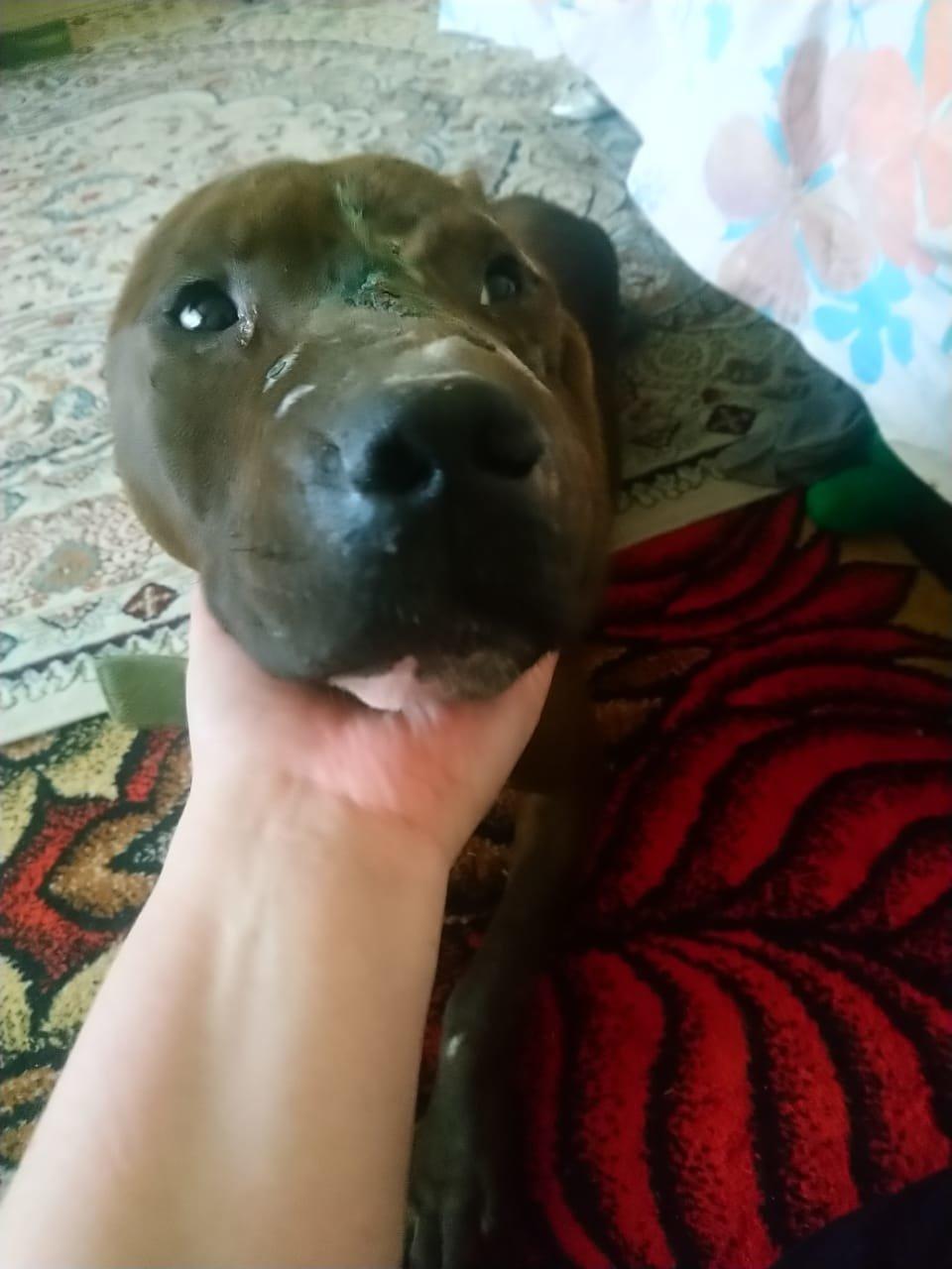 Очередного истерзанного пса нашли волонтеры Актау (ВИДЕО), фото-2