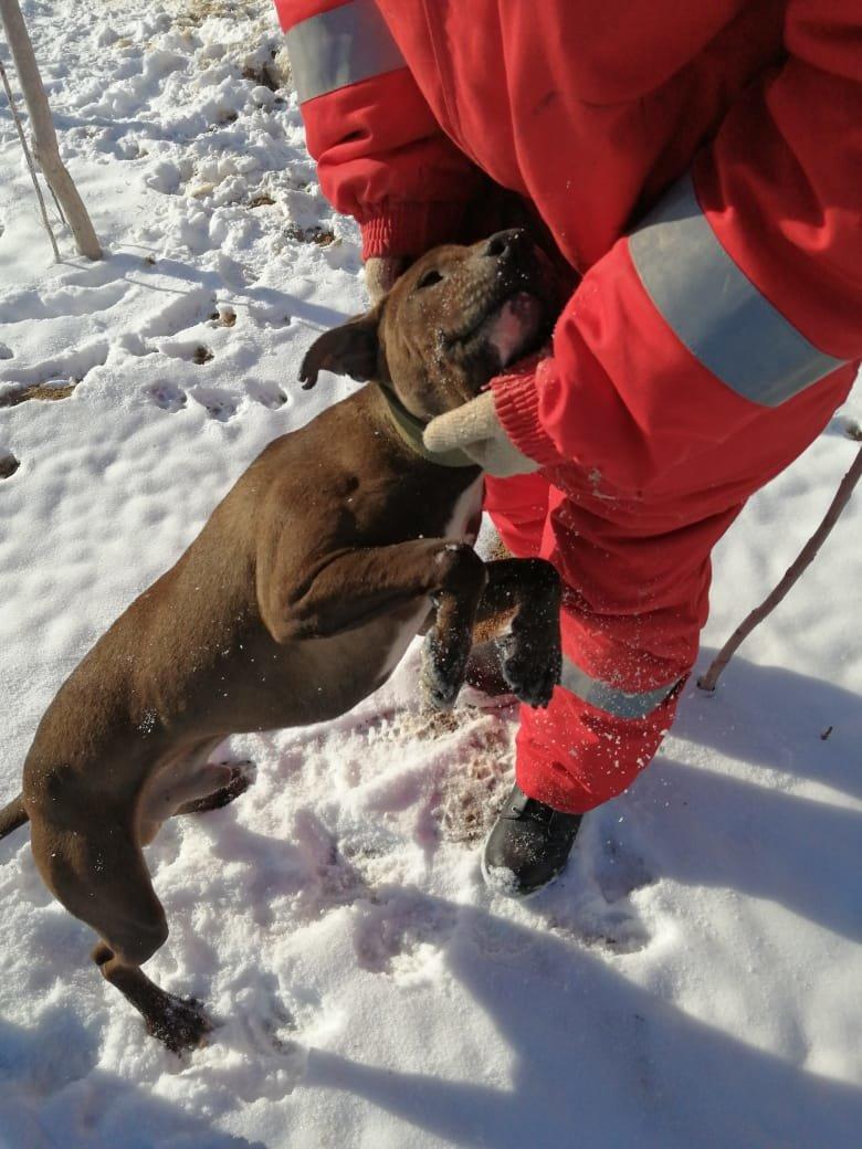 Очередного истерзанного пса нашли волонтеры Актау (ВИДЕО), фото-1