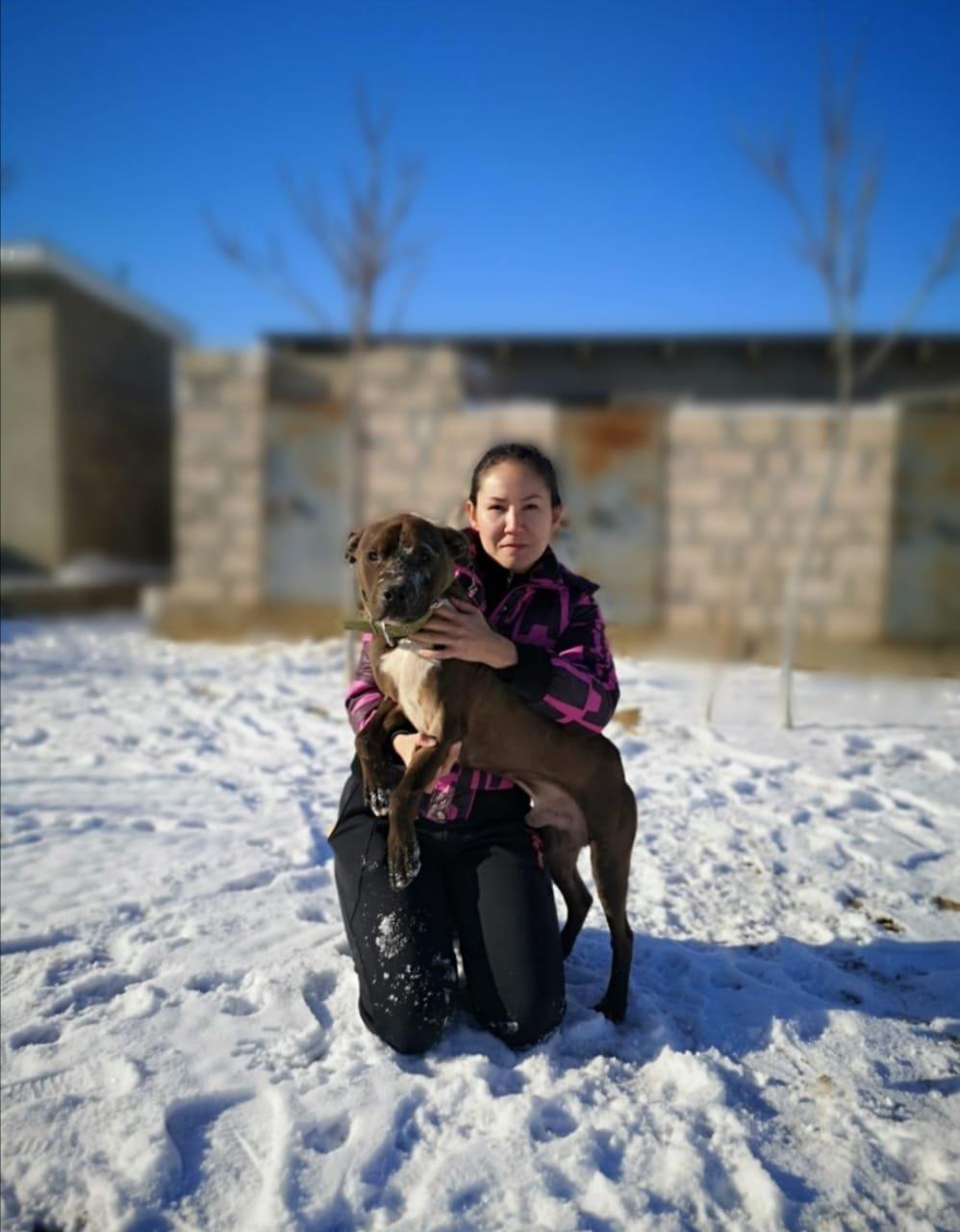 Очередного истерзанного пса нашли волонтеры Актау (ВИДЕО), фото-3