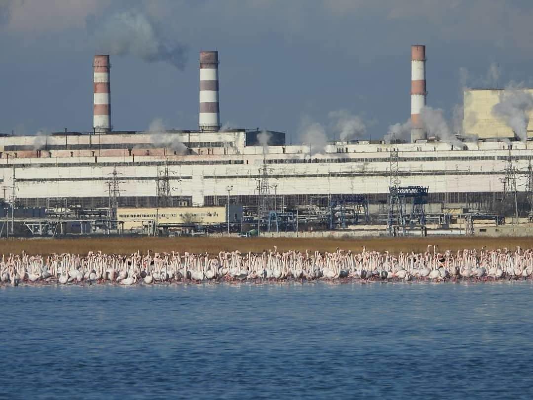 Более тысячи фламинго прилетели в Мангистау (ФОТО), фото-3