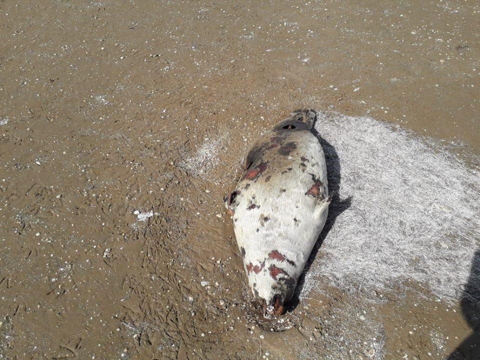 Мертвых тюленей обнаружили на берегу Каспия, фото-1