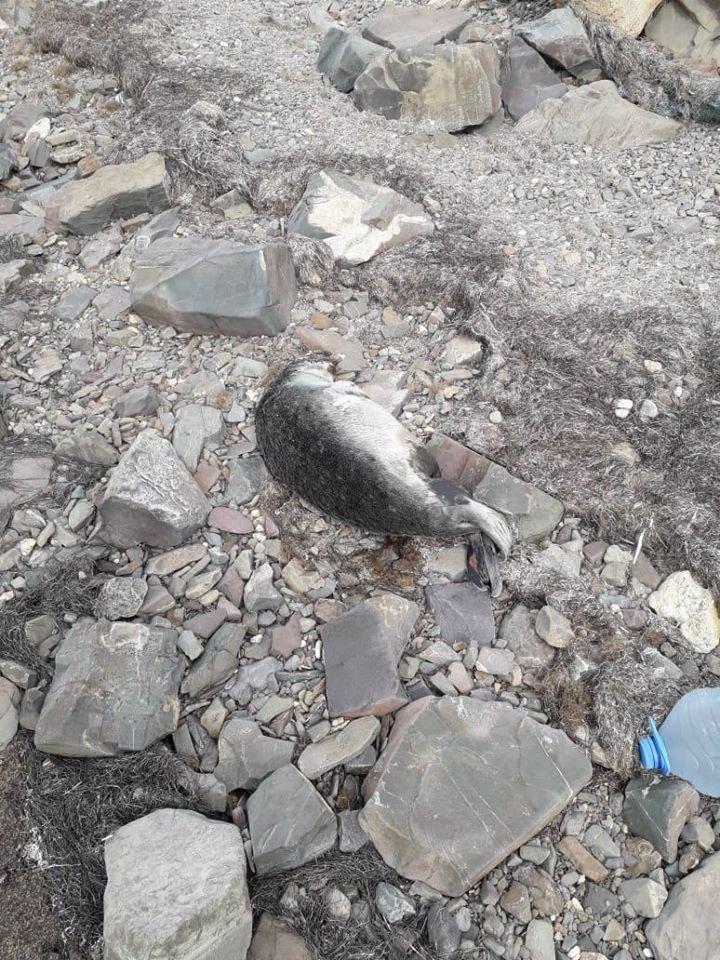 Мертвых тюленей обнаружили на берегу Каспия, фото-2