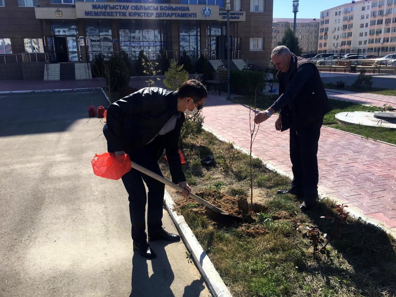 Налоговики высадили деревья в Актау, фото-1