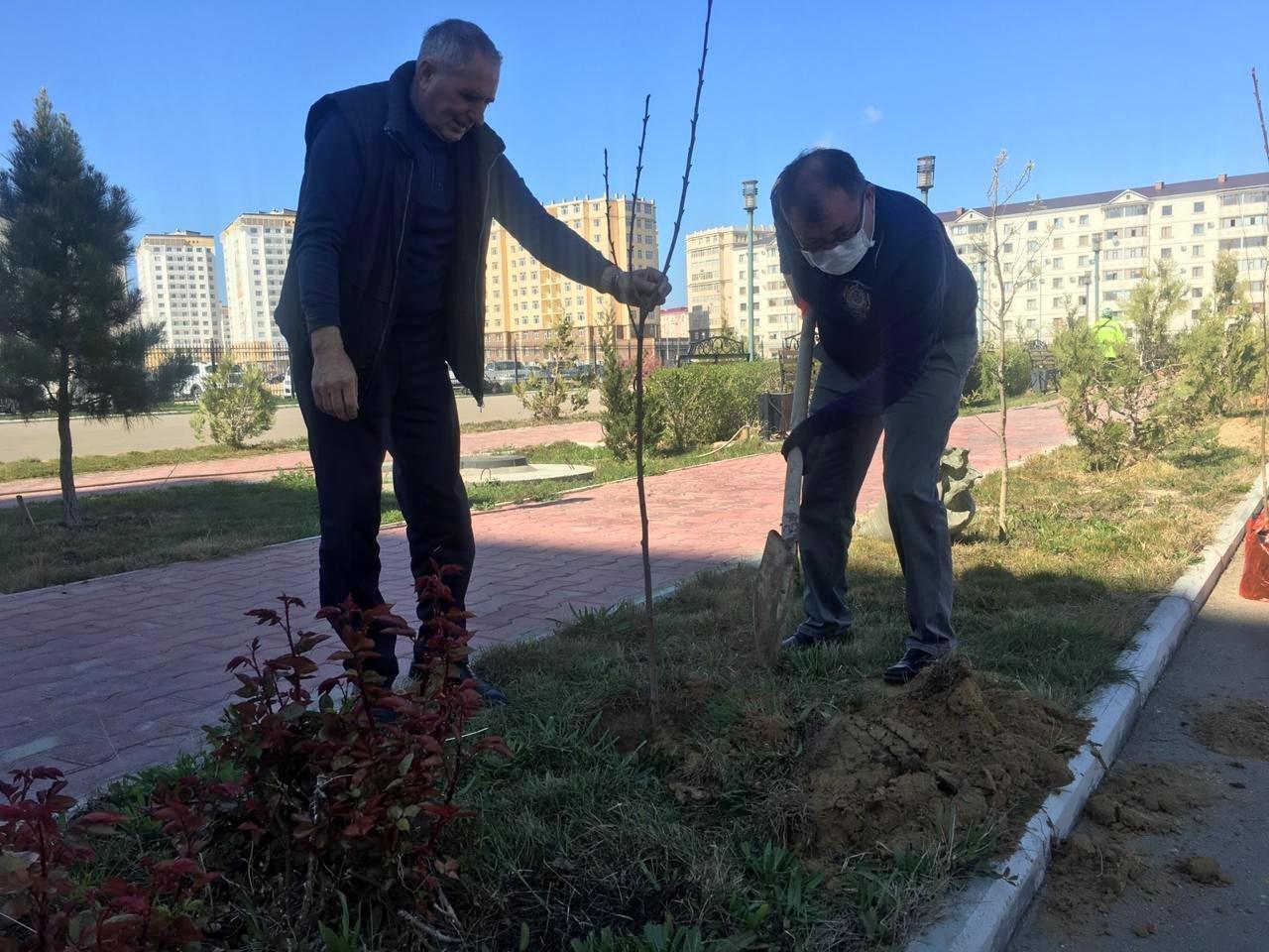 Налоговики высадили деревья в Актау, фото-3