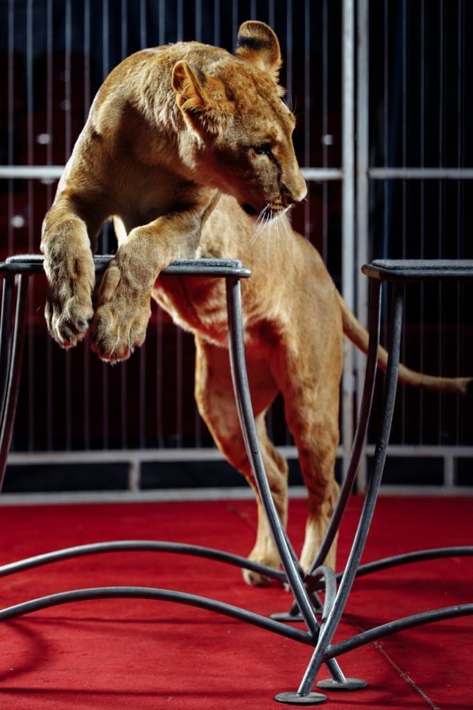 «Сложно, но мы справляемся»: как артисты Московского цирка, застрявшие в Актау, живут в условиях карантина (ФОТО и ВИДЕО), фото-4