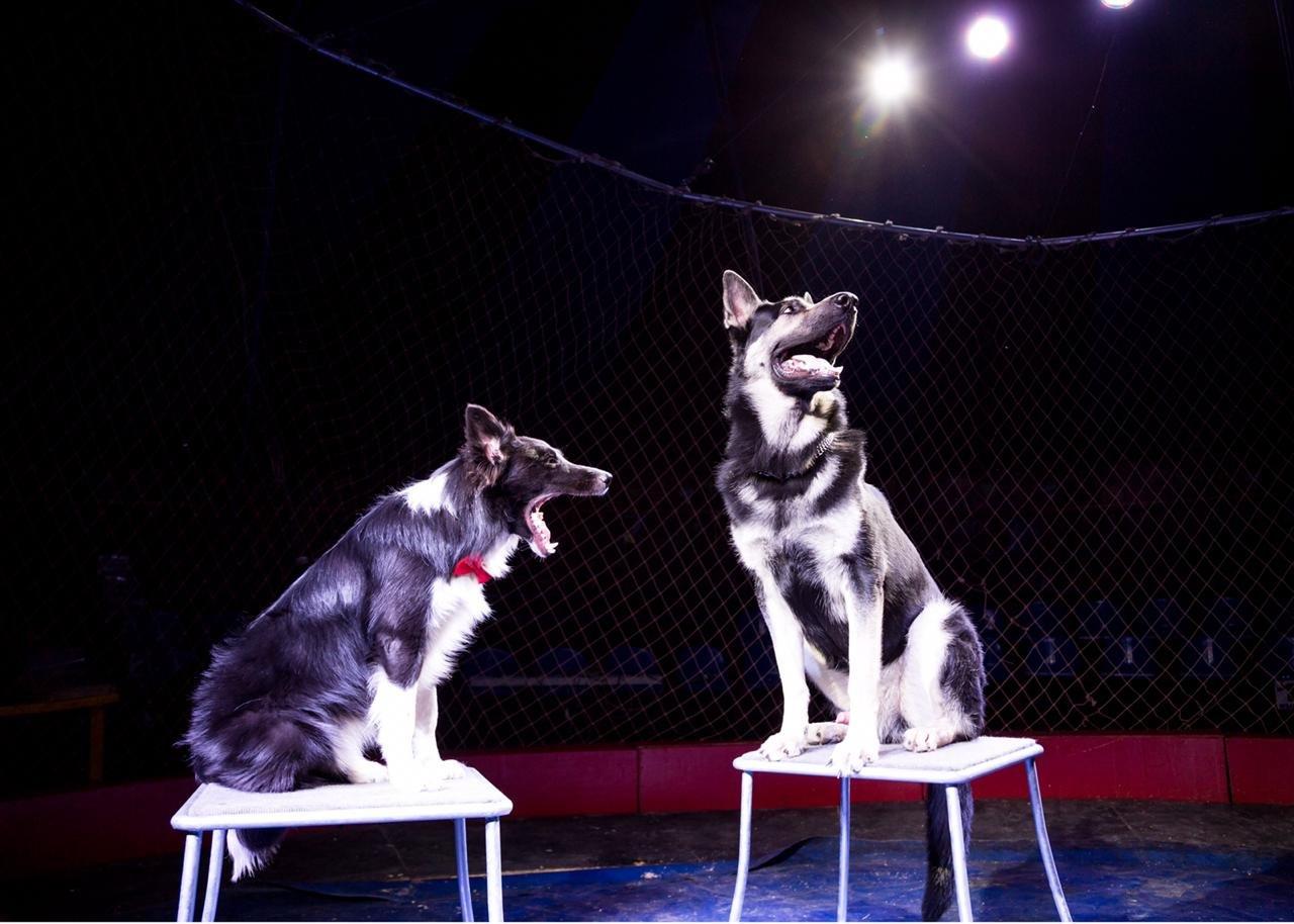 «Сложно, но мы справляемся»: как артисты Московского цирка, застрявшие в Актау, живут в условиях карантина (ФОТО и ВИДЕО), фото-6