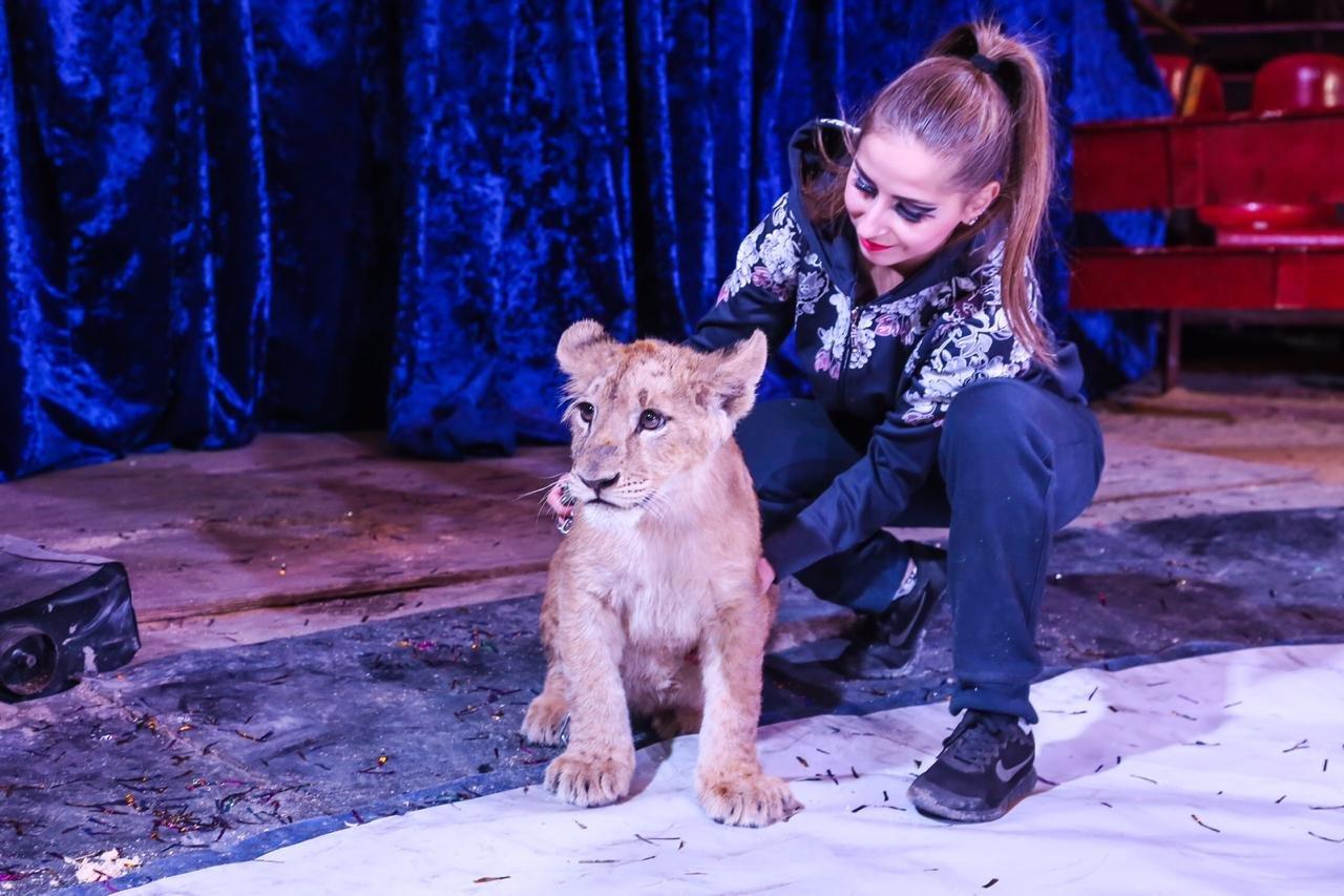 «Сложно, но мы справляемся»: как артисты Московского цирка, застрявшие в Актау, живут в условиях карантина (ФОТО и ВИДЕО), фото-13