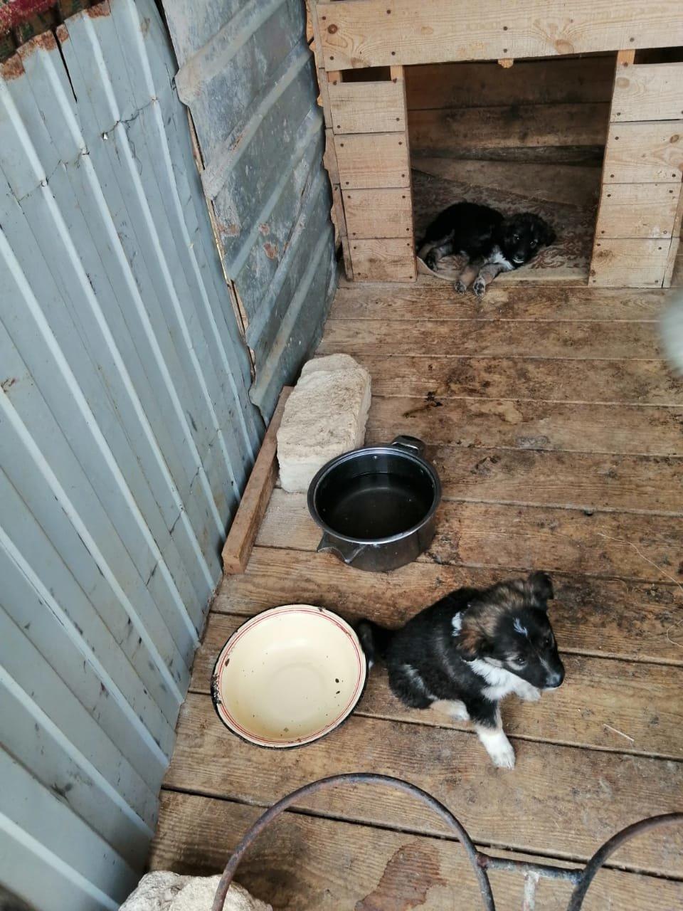 В Актау волонтеры просят помочь бездомным животным, фото-1