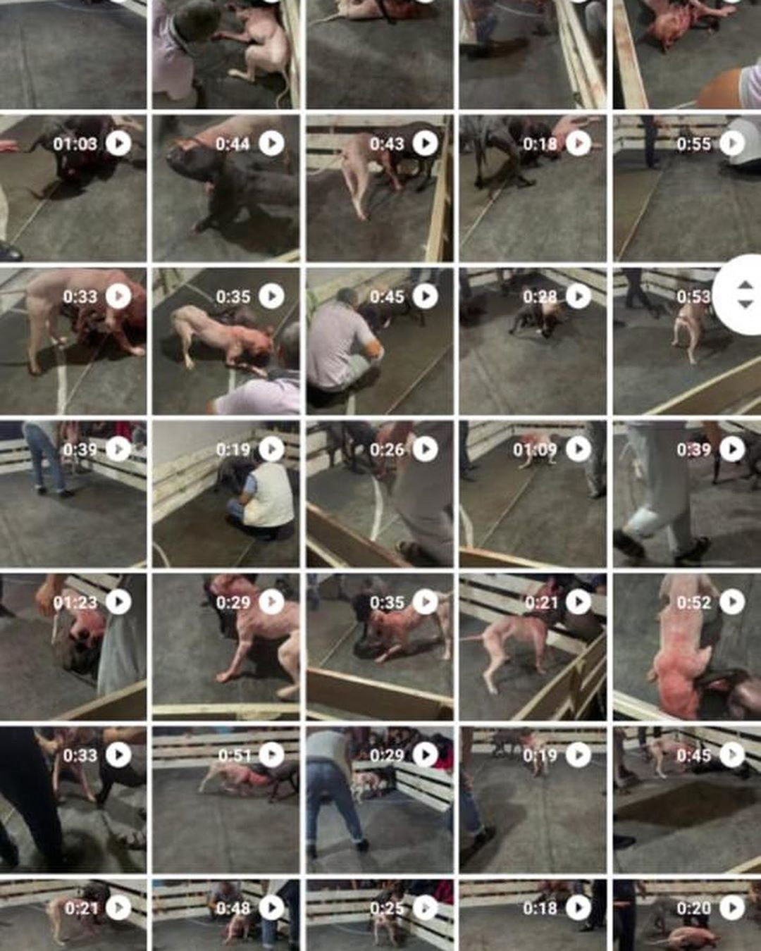 Зоозащитники Актау требуют наказать участников и организаторов собачьих боев , фото-1