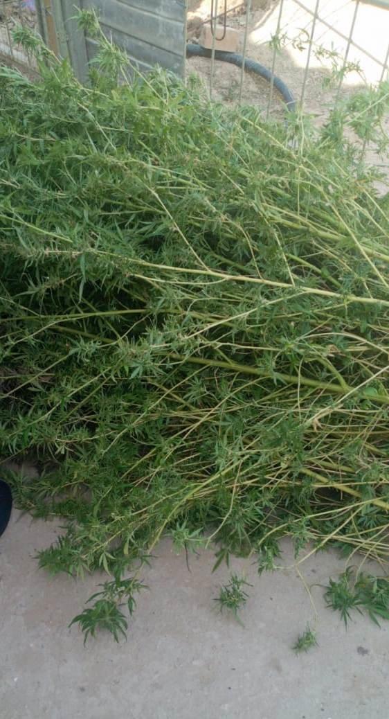 В Жанаозене служебная собака обнаружила 45 килограммов наркотиков , фото-1