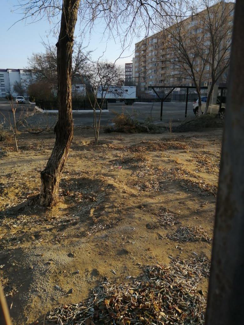 Спил деревьев на территории училища в Актау